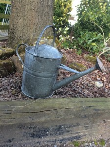 Metal watering can with brass rose